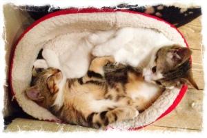 photo-kittens