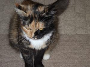 MUM CAT 1