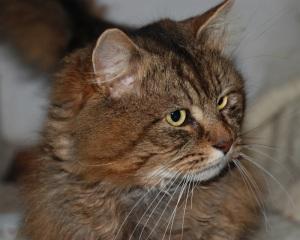 Cat no.1