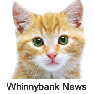 Winnybank-news-cat