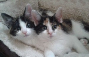 Lilly & Titch - still in need of a new home/homes. Call Sue on 01337 840414 if interested.