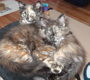 Congratulations to Menna & Maya who have now gone to their new home!
