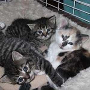 feral-kittens