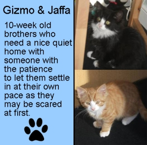 Can you offer these wee boys a loving home?