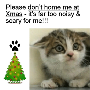 Please don't home kittens as Xmas - it's far too noisy & scary for them!!