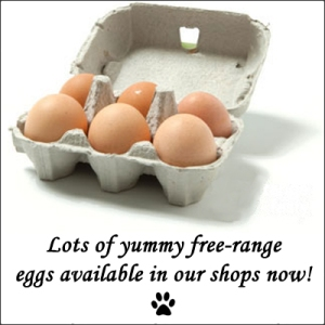 free range eggs copy