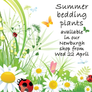 summer bedding