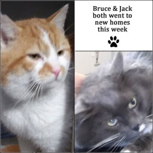 Bruce & Jack were both homed this week after being at Whinnybank for 4 months :-)