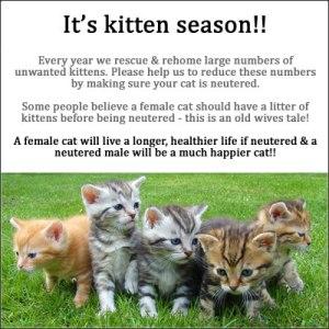 kitten-season