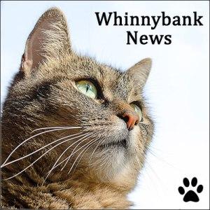 news-tabbycat
