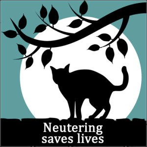 neutering-saves-lives