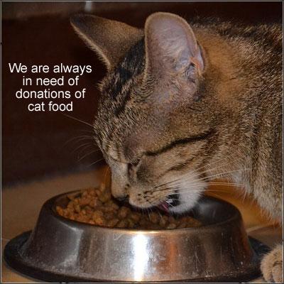 need-cat-food