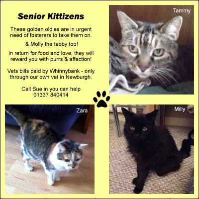 senior-kittizens