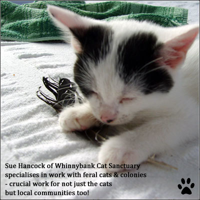 feral-cats