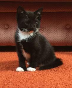 kitten4