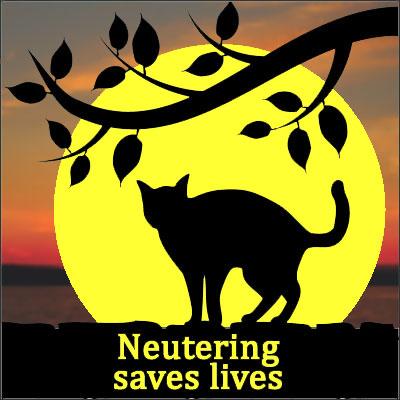 neutering-yellow