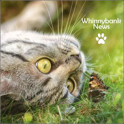 cat-butterfly