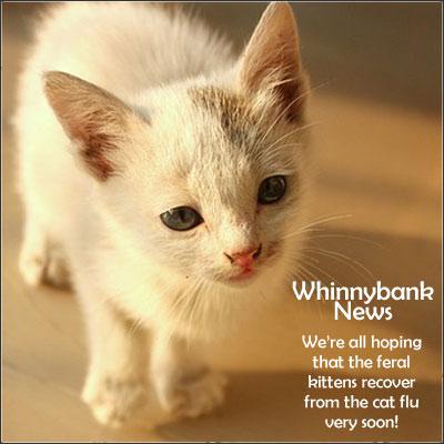 kittens-flu