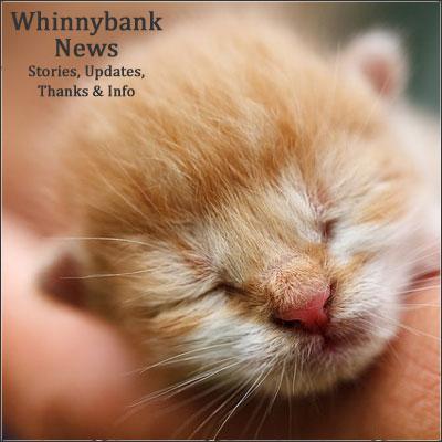 may17-kitten